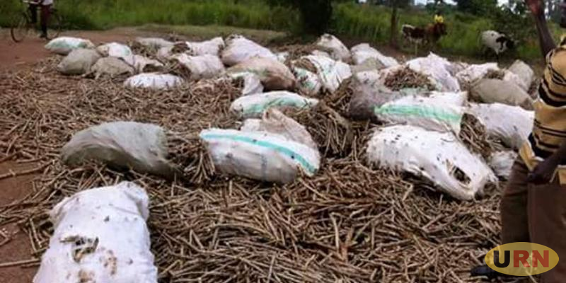 Farmers Protest Late Delivery of Planting Materials